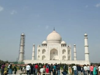 Sangamari is fading the glow of Taj Mahal, seasonal worm 'Goldie Cairo Nomus', these are being taken