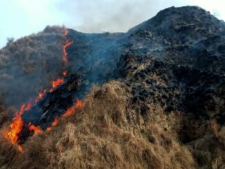 Fierce fire in Chambal forest for unknown reasons, spread for many kilometers