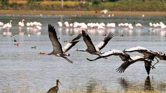 World Migratory Bird Day: Agra is so friendly to migratory birds
