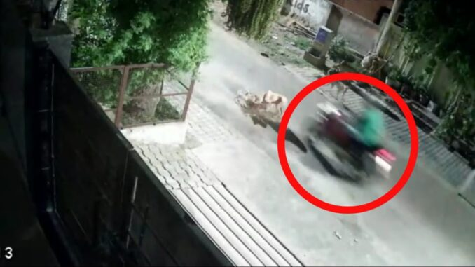 Abominable act: Killing a puppy by being crushed by a bike twice, video goes viral
