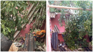 Tree fell down due to strong wind, two women seriously injured